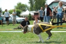 Staffbullshow2010